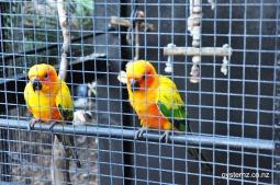 The wee love birds.
